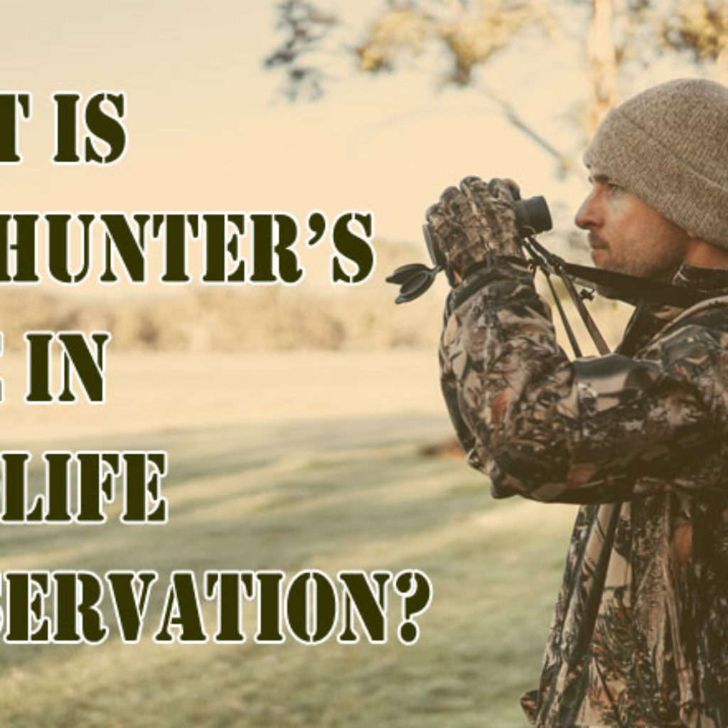 what is the hunter's role in wildlife conservation