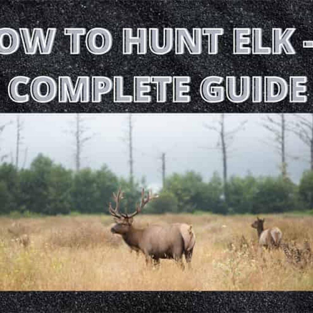 HOW TO HUNT ELK