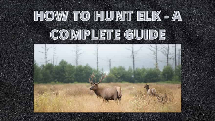 HOW TO HUNT ELK